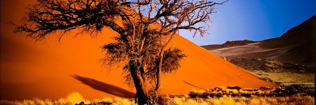 What Is The Best Time To Visit Namibia?