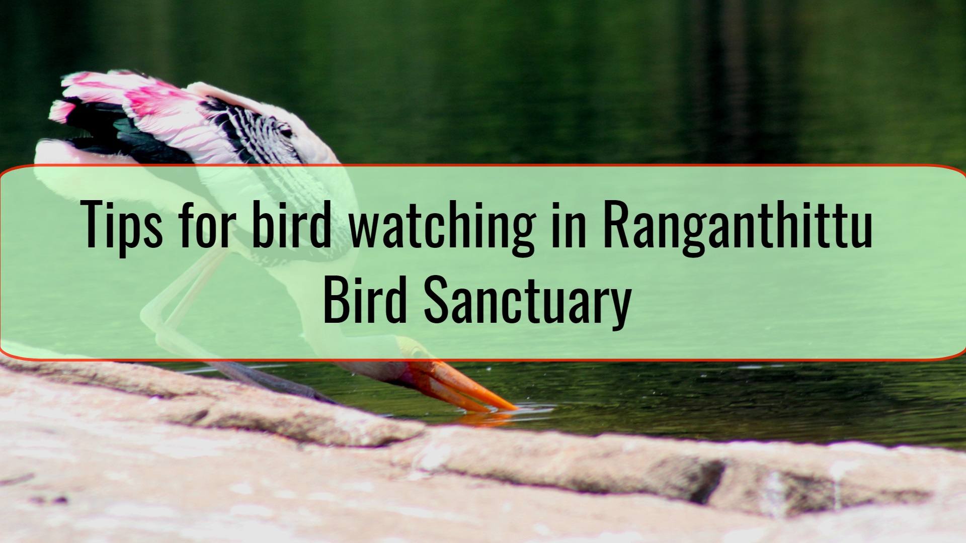 Tips for bird watching in Ranganthittu Bird Sanctuary