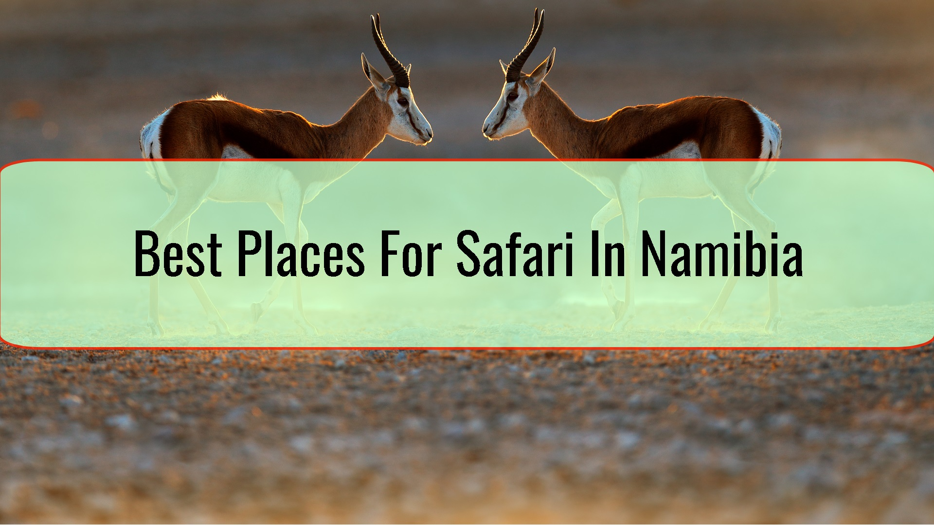 Best Places For Safari In Namibia