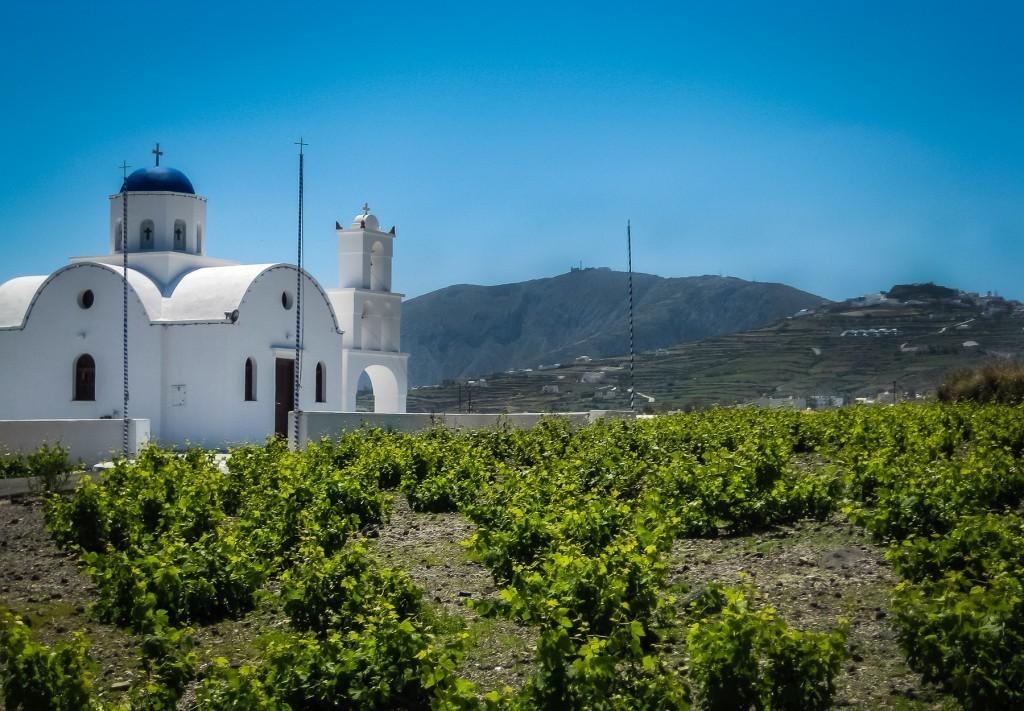 santorini vineyards